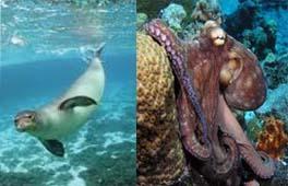 hukum memakan anjing laut dan gurita